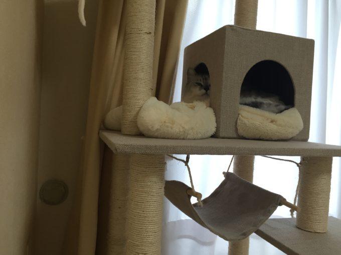 キャットタワー 猫 賃貸