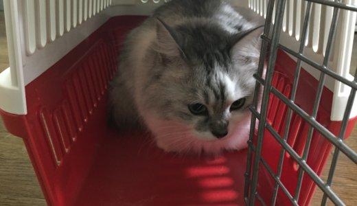 【猫のおでかけ】おすすめのキャリーバッグと選び方。移動しやすく持ち運びしやすいけど壊れない頑丈さ。
