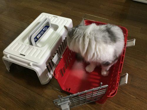 猫 キャリー おすすめ