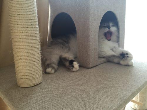 キャットタワー 猫 おすすめ