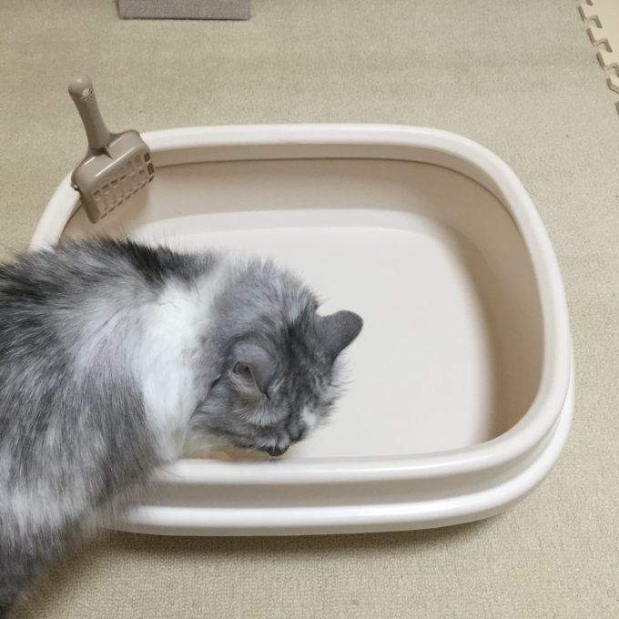 猫 トイレ 種類 使いやすい ケージの中