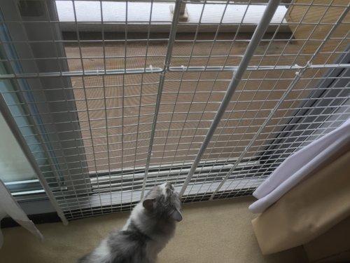 猫 脱走防止 フェンス 自作 DIY 100円ショップ 突っ張り棒 ワイヤーネット