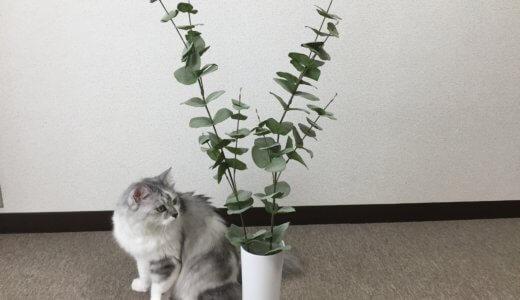 【ニトリ】フェイクグリーン+白い花瓶で殺風景インテリアから脱出!