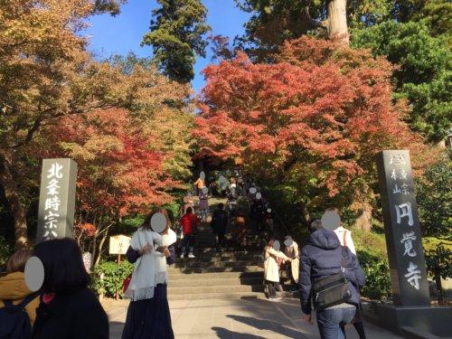 円覚寺 紅葉 現在 2018 鎌倉 観光