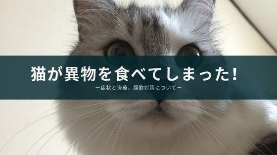 猫が異物を食べた 誤飲 腸閉塞 症状 対策 病院 検査 薬 吐いた