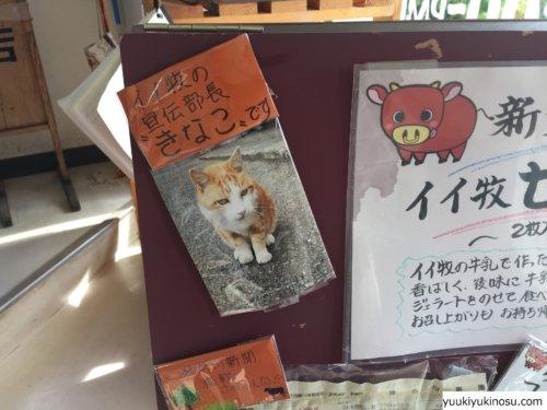 神奈川 藤沢 江ノ島 ドライブ アイス ジェラート 牛乳 飯田牧場 絶品