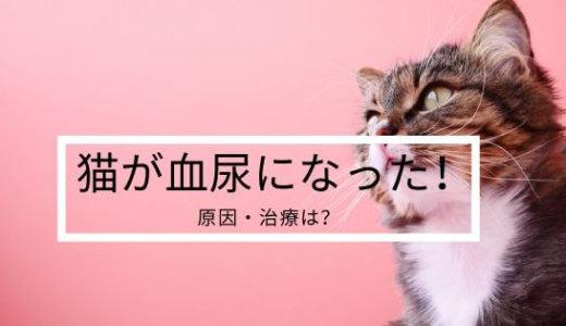 【猫】血尿が出た!原因はストレス?結石?膀胱炎?繰り返さないための治療と餌は?