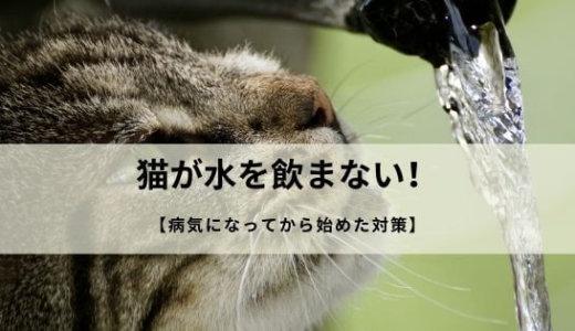 【猫】水飲まない時の対策!一番効果があった飲ませ方は?