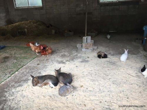 服部牧場 動物 触れ合い えさやり 見学 動物