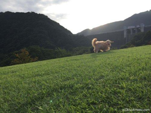 県立あいかわ公園 ペット 犬 散歩