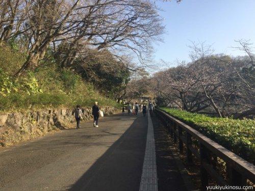 神奈川 横浜 三ッ池公園 駐車場 桜 花見 混雑 ピクニック ジョギング 散歩 犬