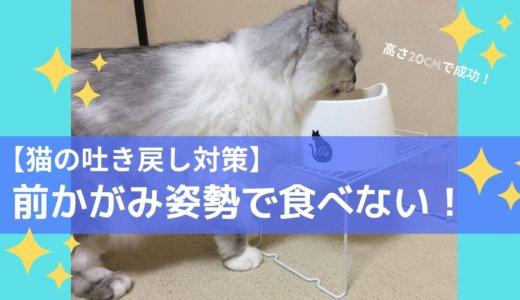【猫】吐き戻し対策は皿の高さ!毛玉しか吐かなくなった成功例を紹介