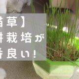 猫草 育て方 水耕栽培 キット キッチンファーム 自作 室内 カビ コスパ