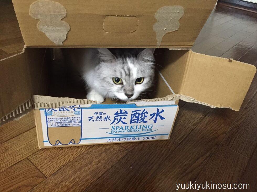 猫 ハウス ドーム おすすめ 夏用 収納ボックス ペットハウス ニトリ 段ボール好き